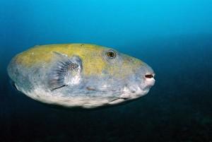 diving with Almarik in Gili T