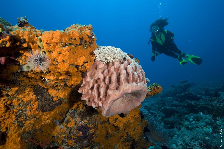 Hans Reef