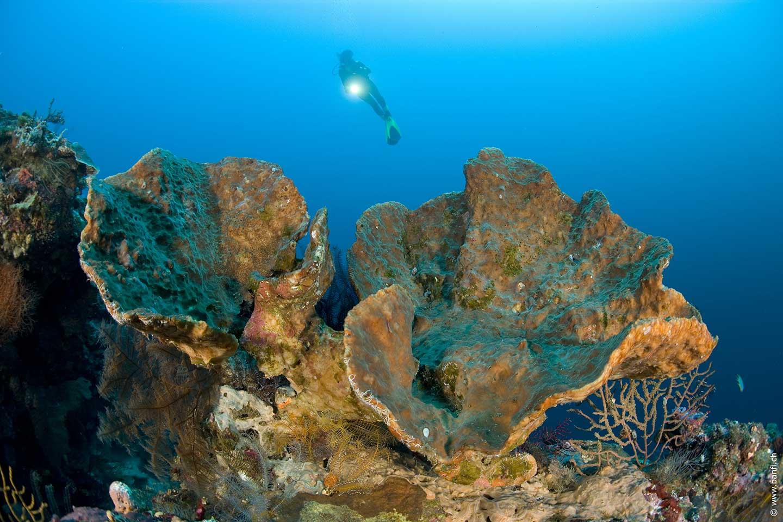 Simons Reef