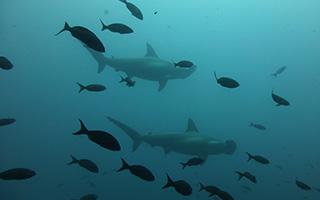 Diving Gili Island