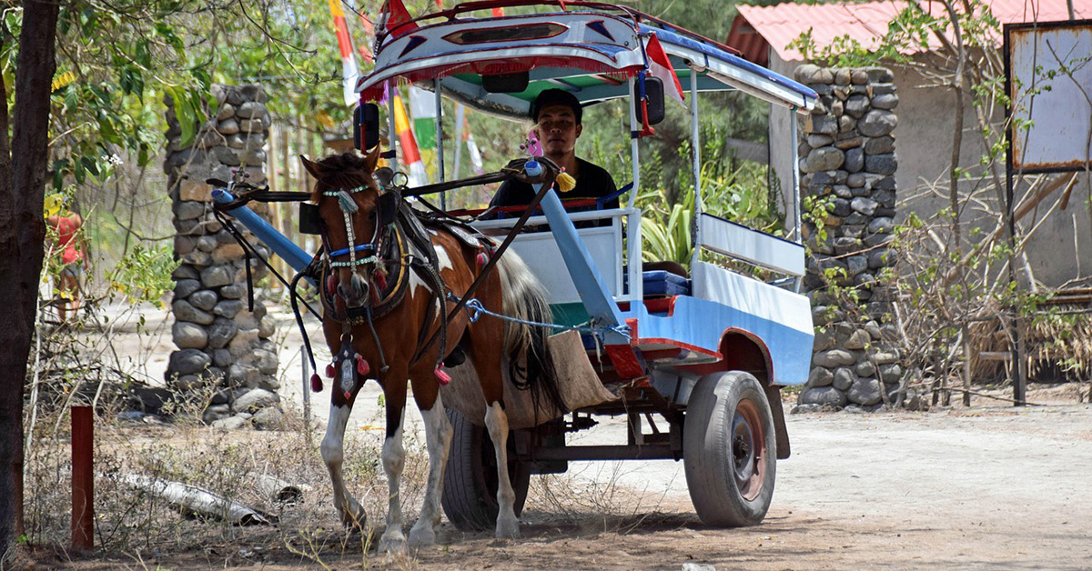 Dokar horse drawn cart, Gili Trawangan