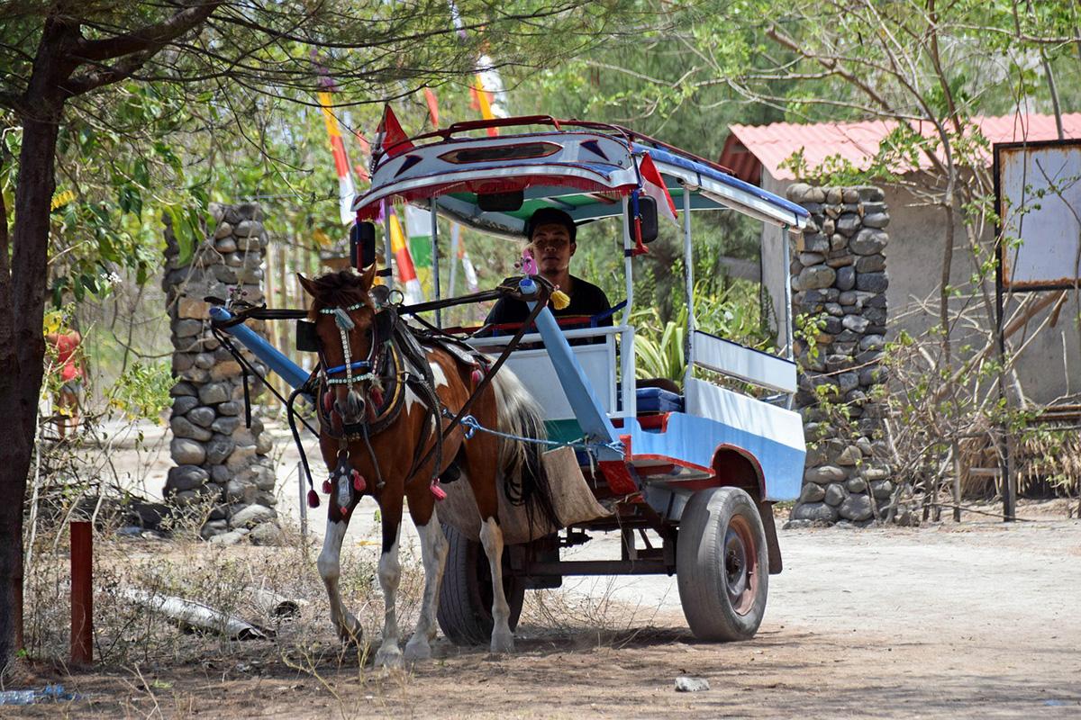 Cidomo transport around Gili Trawangan