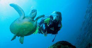 Sea turtles at Halik Gili Trawangan
