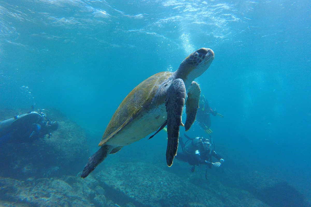 Diving with Turtles at Gili Islands