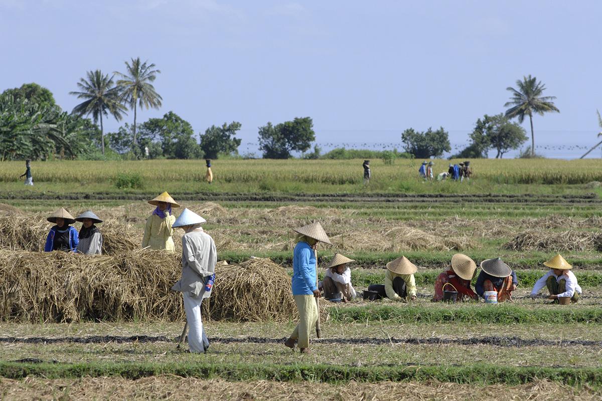 Sasak villages Lombok, Indonesia