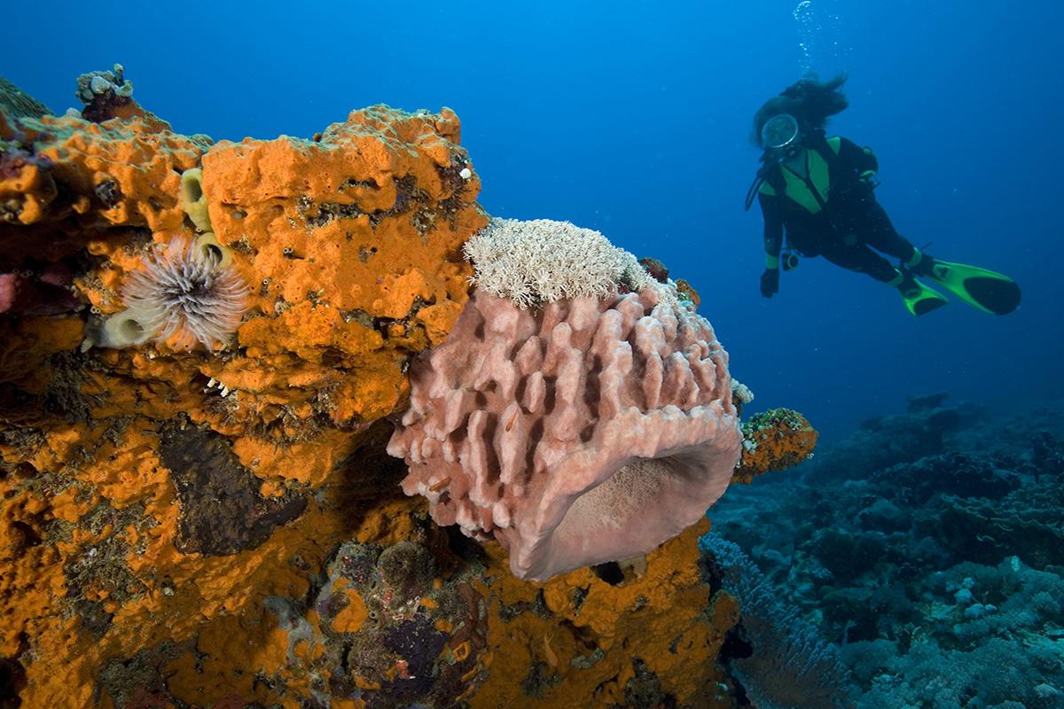 Padi Specialty Dive Courses in Gili Trawangan