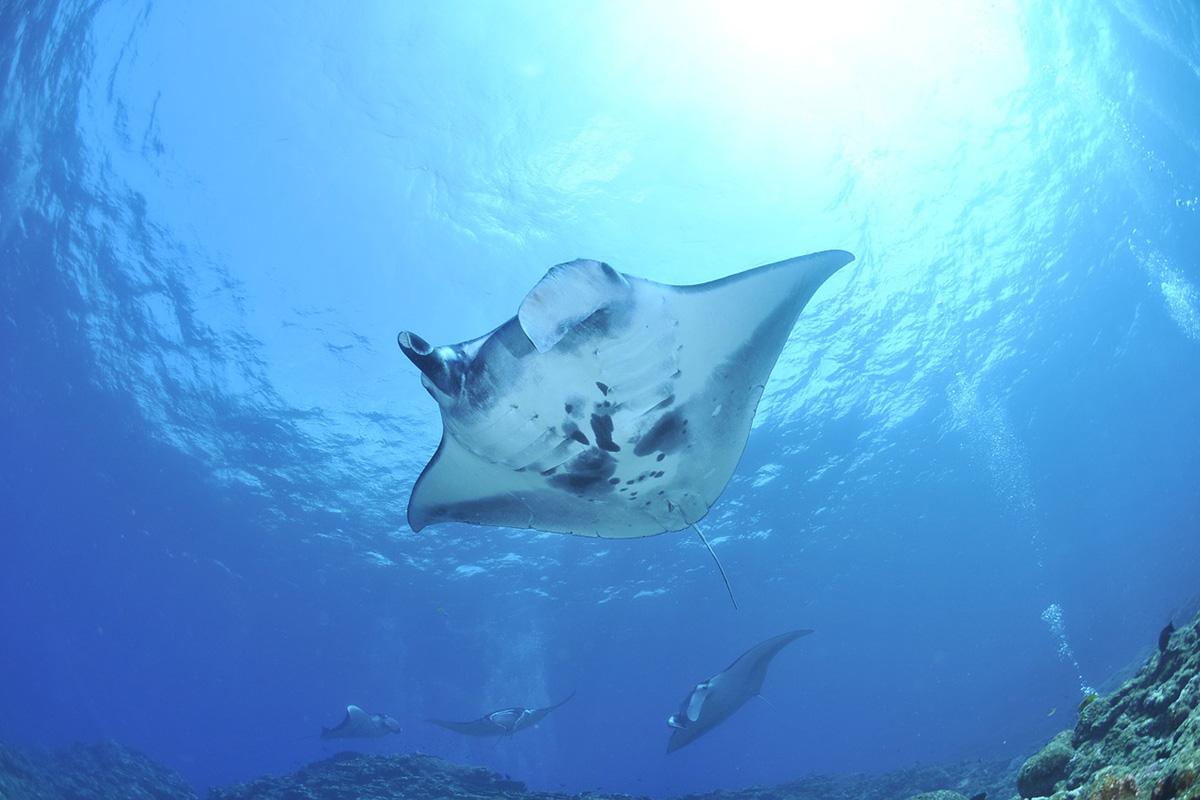 Best Dive Sites around Gili Trawangan