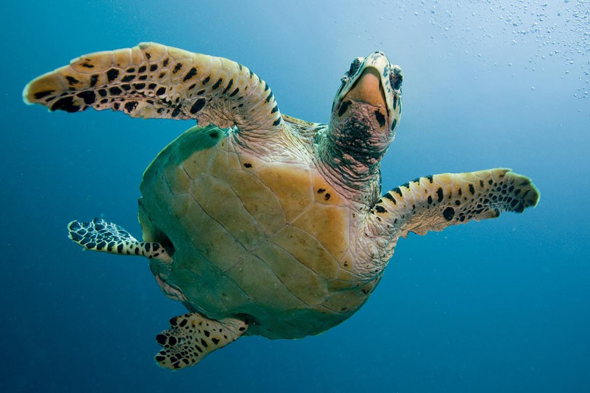 Sea Turtle in Gili Trawangan: A Paradise for Snorkelers