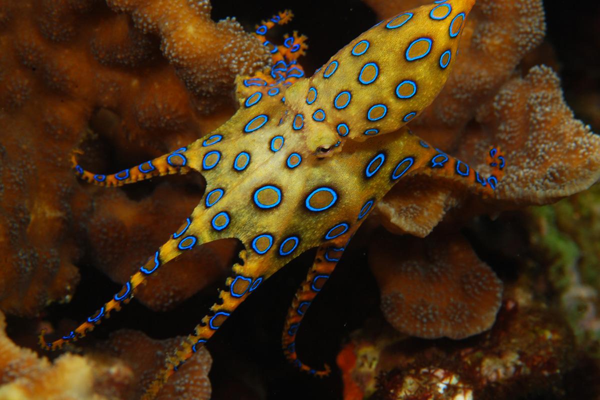 Rare Marine Creatures You Might Find Around Gili Trawangan