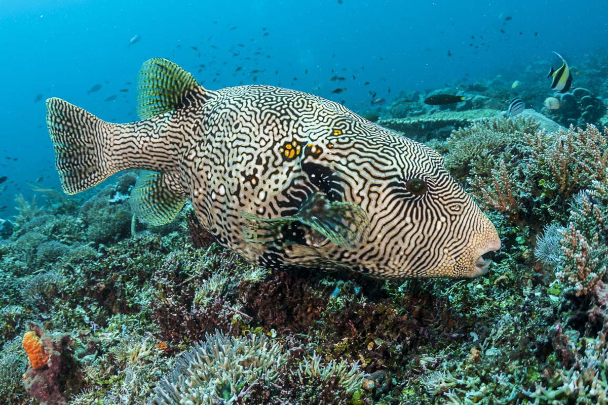 How to Prepare for a Dive Trip to Raja Ampat
