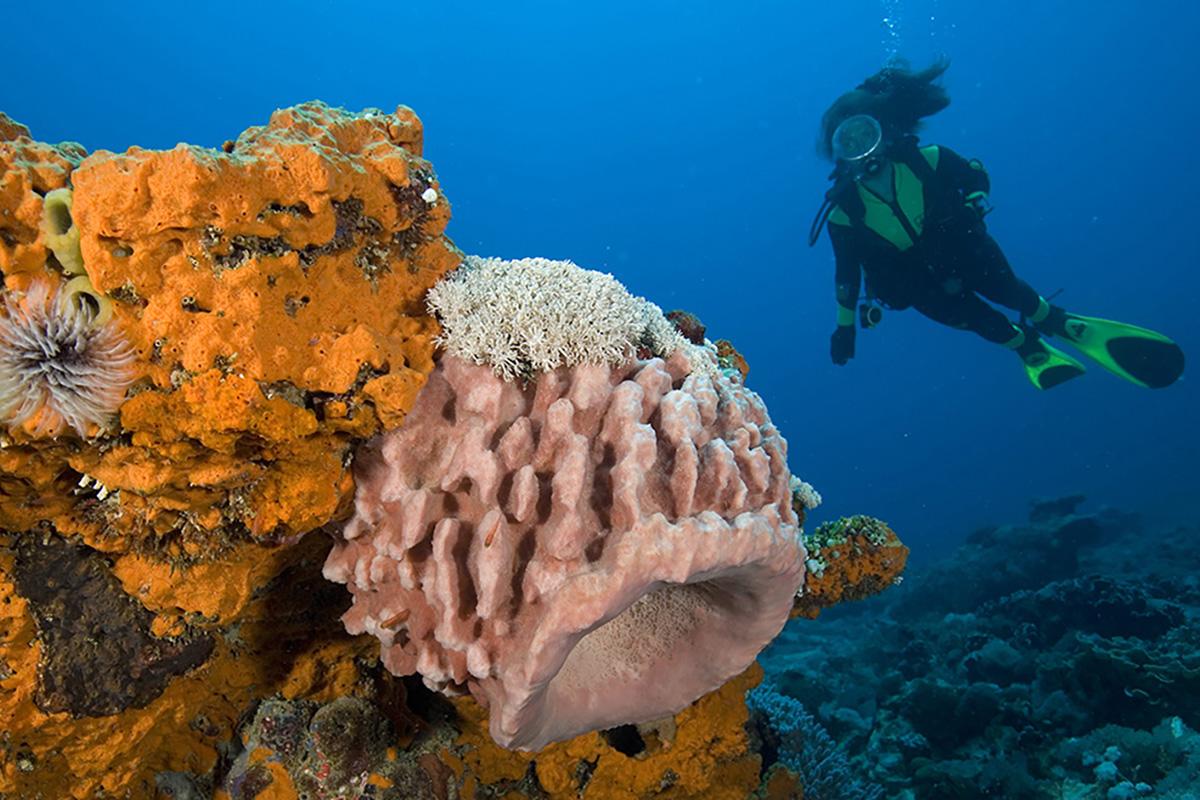 Diving in Gili Trawangan - Deep Turbos
