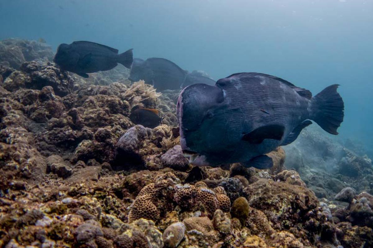 4 Unmissable Dives in Gili Trawangan