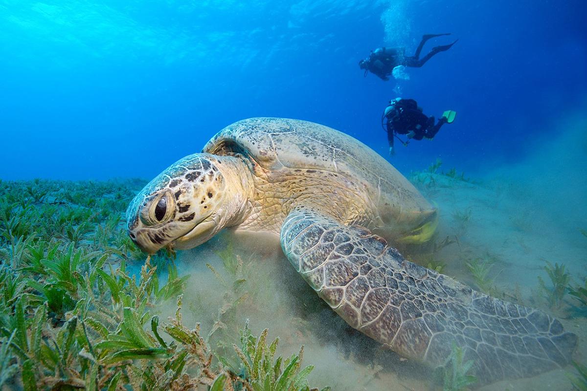Responsible Diving