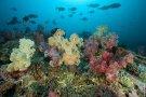 diving-lombok_1_20130315_1060497293