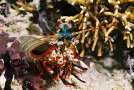 diving-lombok_2_20130315_2092300127