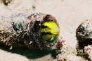 diving-lombok_4_20130315_1808030853