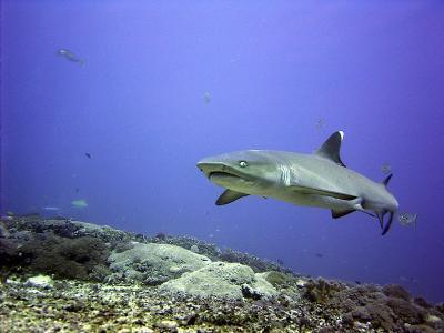 diving-lombok_5_20130315_2010822318